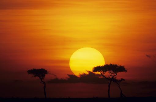 Masai Mara National Reserve「Sun rising over savannah, Masai Mara National Reserve, Kenya」:スマホ壁紙(14)