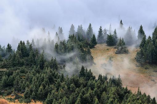 Fog「Ukraine, Zakarpattia region, Rakhiv district, Carpathians, Chornohora, Mist over forest」:スマホ壁紙(17)