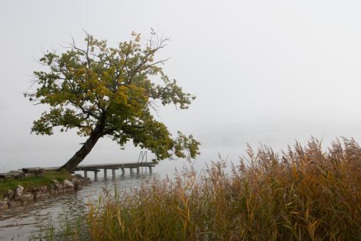 Salzkammergut「Austria, Irrsee, View of oak tree in fog」:スマホ壁紙(17)