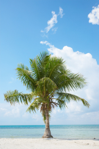 Frond「Lone palm tree on beach in Miami, Florida」:スマホ壁紙(11)