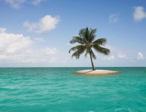 島「Lone palm tree on small island」:スマホ壁紙(16)