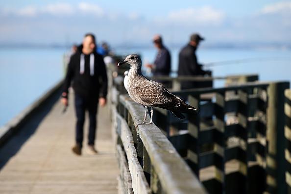 Waiting「Aucklanders Make Most Of Sunny Weather At Cornwallis Peninsula」:写真・画像(14)[壁紙.com]