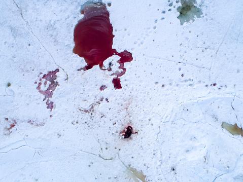 Polar Bear「Blood on snow left after animals hunting, Spitsbergen, Svalbard and Jan Mayen, Norway」:スマホ壁紙(12)
