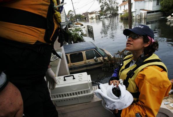 animal「Aftermath of Hurricane Katrina」:写真・画像(0)[壁紙.com]