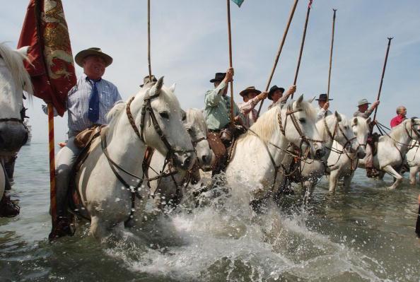 Camargue「Gypsies Celebrate The Procession To the Sea」:写真・画像(15)[壁紙.com]