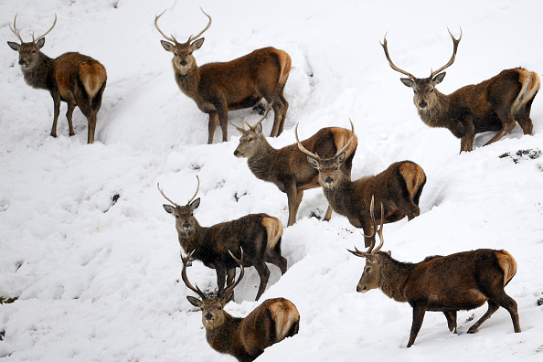 Snow「Snow And High Winds Hit Parts Of Scotland」:写真・画像(8)[壁紙.com]