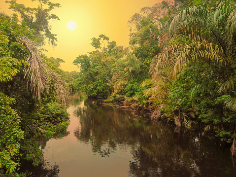 Tropical Rainforest「Tortuguero River, Tortuguero National Park, Costa Rica」:スマホ壁紙(10)