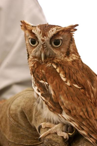 Animals Hunting「Maryland Celebrates The Return Of The Bald Eagle」:写真・画像(4)[壁紙.com]