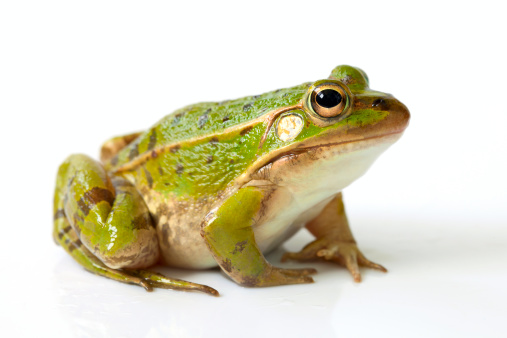 Frog「Frog」:スマホ壁紙(3)