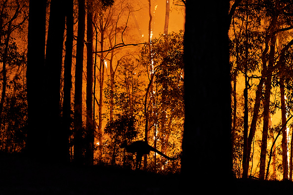 Forest Fire「Emergency Warning Issued For Hawkesbury As Bushfire Nears Sydney Outskirts」:写真・画像(1)[壁紙.com]