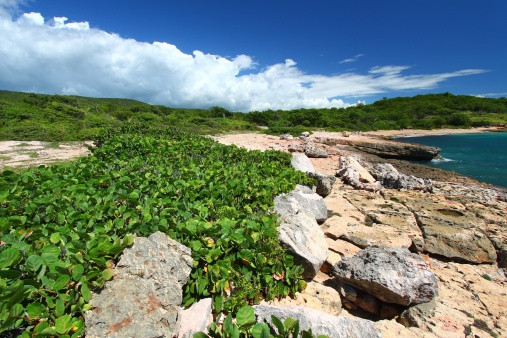 Eco Tourism「Guanica Reserve - Puerto Rico」:スマホ壁紙(16)