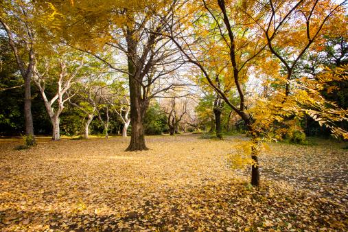 Japan「Koishikawa Botanical Garden, Tokyo in autumn.」:スマホ壁紙(15)