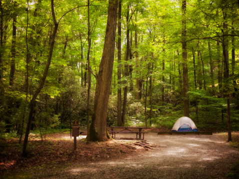 Camping「tent in the woods」:スマホ壁紙(10)