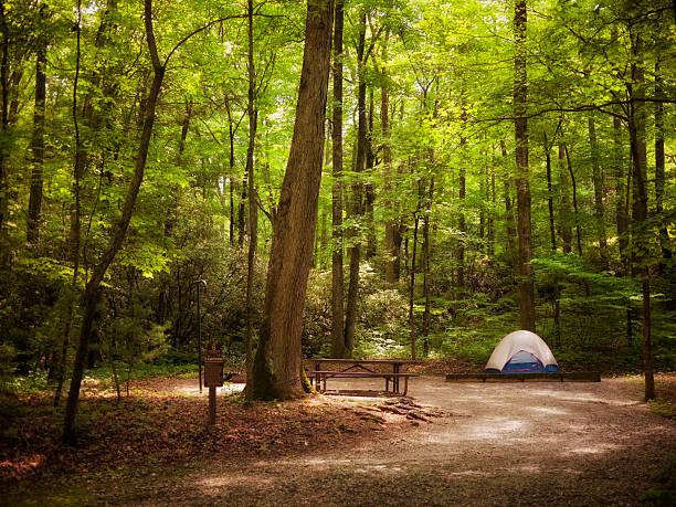 tent in the woods:スマホ壁紙(壁紙.com)
