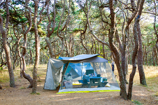 Camping Chair「tent in the woods」:スマホ壁紙(14)