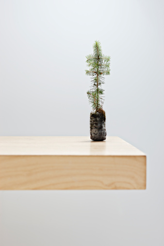 Sapling「Small tree on table top」:スマホ壁紙(5)