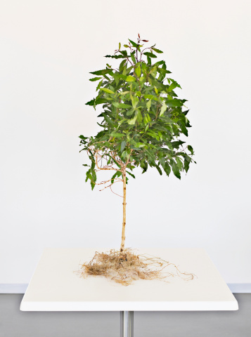 Responsible Business「Small tree growing on tabletop」:スマホ壁紙(19)