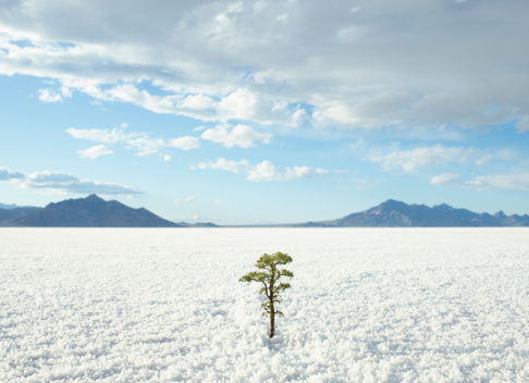Digital Composite「Small tree growing on salt flats」:スマホ壁紙(8)