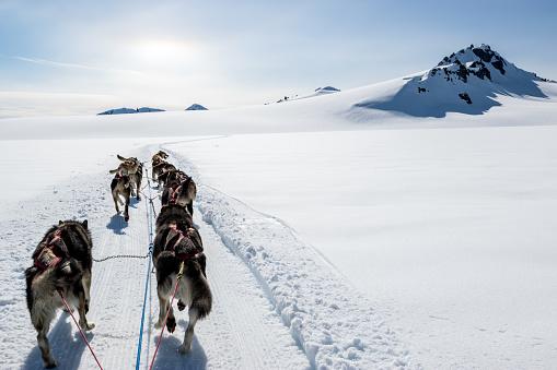 Dogsledding「Dogsledding on a mountain peak.」:スマホ壁紙(9)