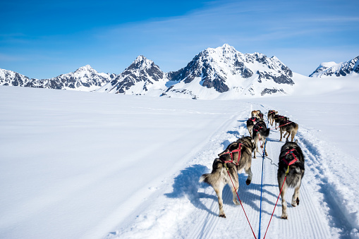 Dogsledding「Dogsledding on a mountain peak.」:スマホ壁紙(10)