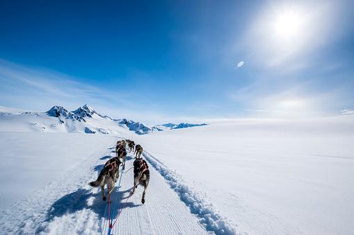 Dogsledding「Dogsledding on a mountain peak.」:スマホ壁紙(18)