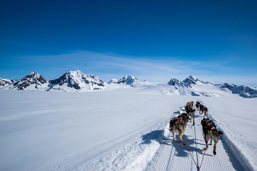 Dogsledding「Dogsledding on a mountain peak.」:スマホ壁紙(15)