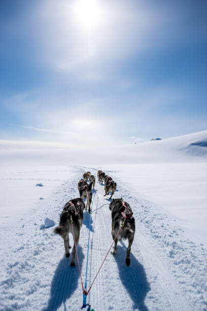 Dogsledding on a mountain peak.:スマホ壁紙(壁紙.com)