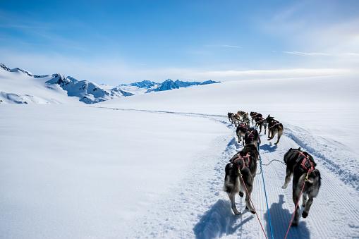 Dogsledding「Dogsledding on a mountain peak.」:スマホ壁紙(11)