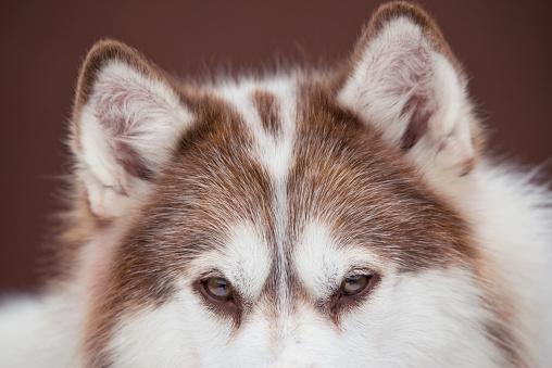 Dogsledding「Dogsledding in Winter Storm」:スマホ壁紙(19)