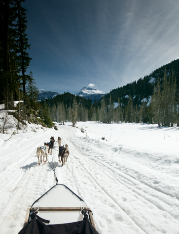 Dogsledding「Dogsledding, Canada.」:スマホ壁紙(18)