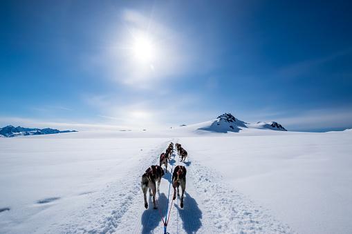 Snow sled「Dogsledding on the mountain」:スマホ壁紙(16)