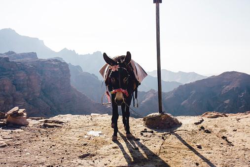 Pack Animal「Jordan, Petra, Donkey」:スマホ壁紙(5)