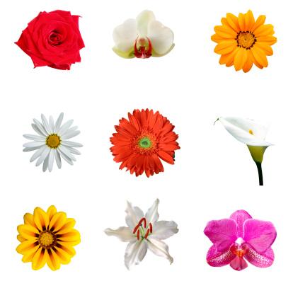 ひまわり「熱帯の花の XXXL 9」:スマホ壁紙(2)