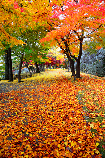 Grove「Morioka castle park ruins in autumn」:スマホ壁紙(17)