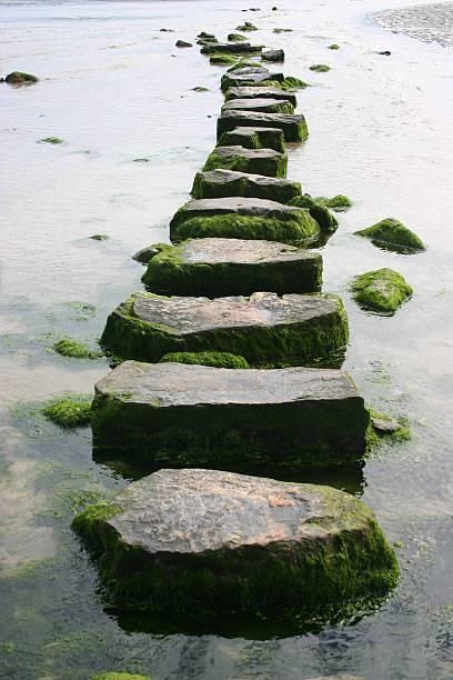 mossy stepping stones:スマホ壁紙(壁紙.com)