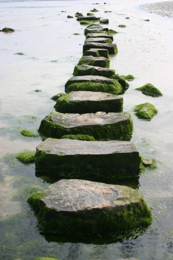 Vertical「mossy stepping stones」:スマホ壁紙(7)