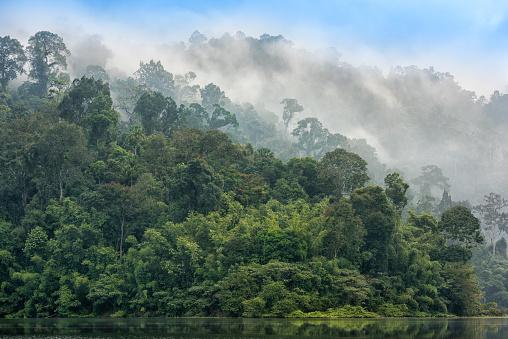 Rainforest「Rainforest Sunrise, Khao Sok National Park, Thailand」:スマホ壁紙(12)