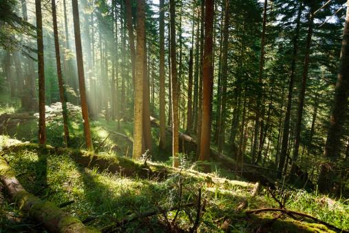 南国「熱帯雨林」:スマホ壁紙(8)