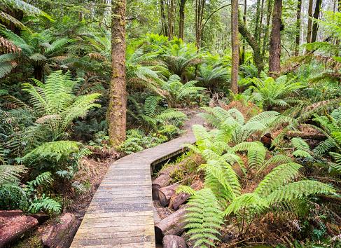 Frond「Rainforest Jungle Track, Nature Background, Rich Lush Colors」:スマホ壁紙(10)