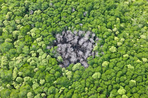 Queensland「Rainforest Hit By Lightning, Daintree Forest」:スマホ壁紙(6)