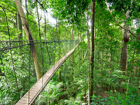 Footpath「Rainforest Canopy Walkway」:スマホ壁紙(1)