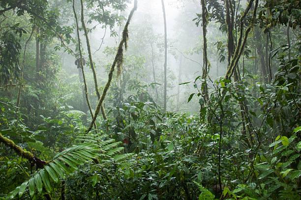 Rainforest, Costa Rica:スマホ壁紙(壁紙.com)