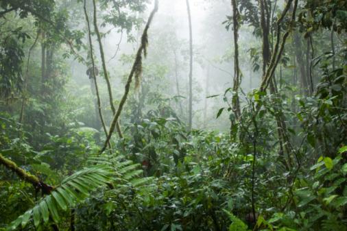 Rainforest「Rainforest, Costa Rica」:スマホ壁紙(14)