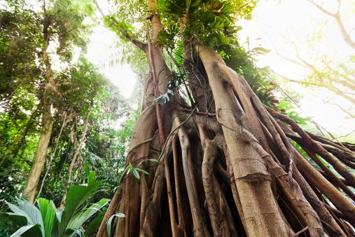 アマゾン熱帯雨林「熱帯雨林」:スマホ壁紙(18)