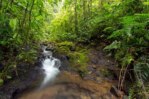 アマゾン熱帯雨林「Rainforest gully」:スマホ壁紙(5)