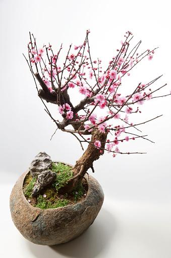 梅の花「The plum blossom」:スマホ壁紙(6)