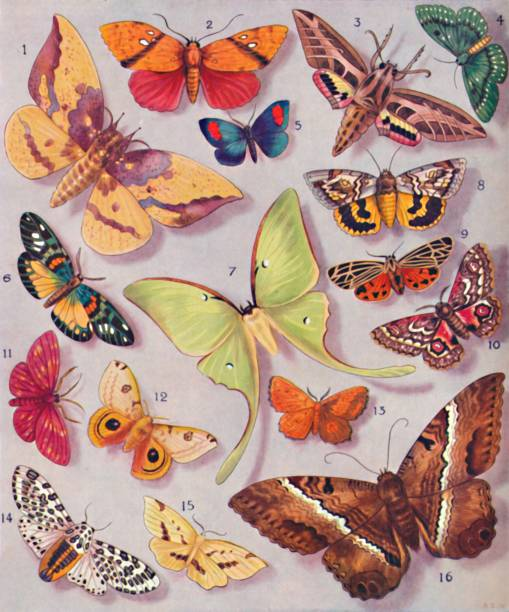 The Magnificent Colouring Of Some Moths:ニュース(壁紙.com)