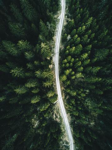 Footpath「summer forest aerial view in switzerland」:スマホ壁紙(13)
