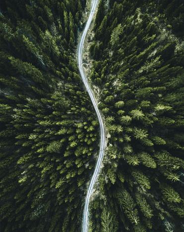 縦位置「スイスの夏森林空中写真」:スマホ壁紙(16)