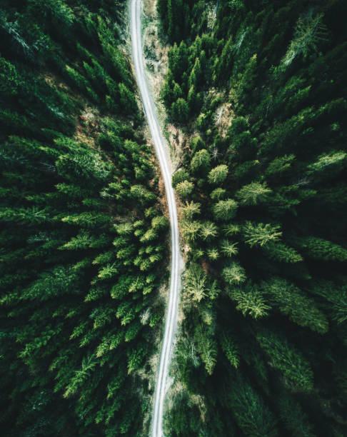 summer forest aerial view in switzerland:スマホ壁紙(壁紙.com)